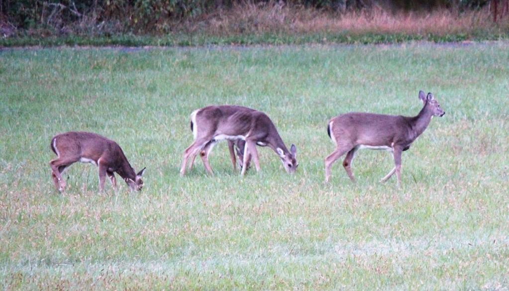 deer-repellent